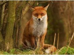 SLG75狐狸饲料设备,狐狸饲料生产线,狐狸饲料机