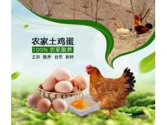 劳山村土鸡蛋