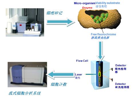 菌落总数检测的注意事项与快速检测技术