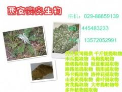 厂家供应 藤茶提取物(二轻杨梅素)