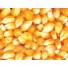 求购玉米小麦大豆高粱等