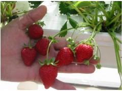 供应生态餐厅阳光会所生态超市各种家庭农场改造方案