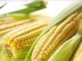 玉米收储制度改革积极效应逐步显现