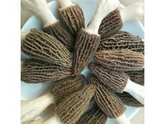 新鲜羊肚菌500g装包邮(香格里拉腹地)