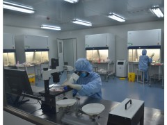 U-138MG细胞系和培养基