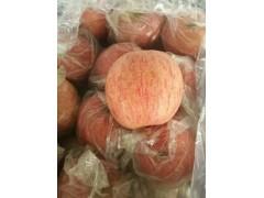 冷库纸袋红富士苹果,冷库膜袋红富士苹果装货价格