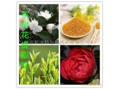 茶树花提取物 茶多酚8% 现货供应