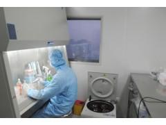 Colon26小鼠结肠癌细胞系