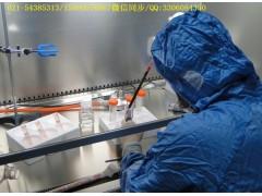 BV2小鼠小胶质复苏细胞系