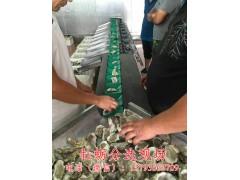 凯祥牡蛎分拣机 不锈钢牡蛎分选大小设备 生蚝分选大小