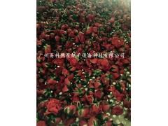 玫瑰花热泵发设备-专业智能烘干机厂家