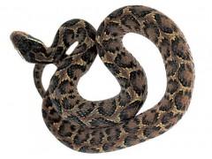 蝮蛇提取物10:1 蝮蛇提取物价格