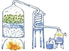 香根油 (岩兰草醇含量:60%)