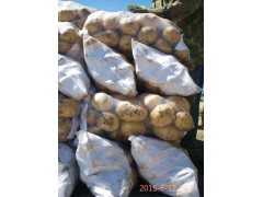 河北唐山玉田荷兰土豆 大白花马铃薯 出口土豆代办加工