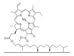叶绿素A Chlorophyll A 的价格