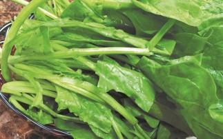 菠菜所含蛋白质 比牛奶还高50%
