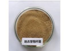 地衣芽孢杆菌厂家|芽孢杆菌价格|肥料菌种供应商|发酵菌种