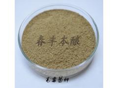 毛霉菌毛霉毛豆腐菌种毛霉菌价格毛霉菌供应毛霉菌厂家