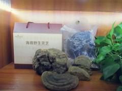 海南原生态野生灵芝