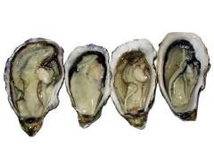 源头厂家 天然牡蛎提取物粉