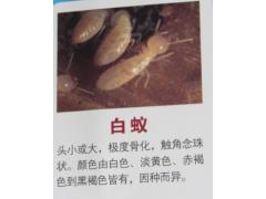 蟑螂、老鼠、苍蝇、蚊子、白蚁等有害生物防治