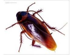 专业白蚁防治 工厂宿舍杀臭虫灭四害 灭鼠 灭蟑螂