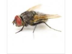 专业除虫灭鼠 白蚁防治 杀臭虫 杀蟑螂等