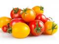 小番茄并非转基因