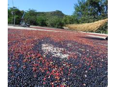 韩城山里农家大红袍优质花椒 无色素陈货次货用过货不加水、油