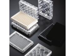 WHB TC处理标准透明细胞培养板 灭菌