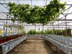 无土栽培设备,技术,加盟
