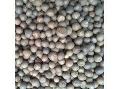 毛尖茶籽 绿茶籽 茶叶籽 茶种 茶树籽