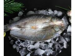 冰冻草鱼,烤鱼半成品鱼,腌制鱼,浔味堂,批发