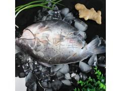 冰冻清江鱼,烤鱼半成品鱼,腌制鱼,浔味堂,批发