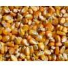 求购玉米小麦碎米高粱木薯淀粉等