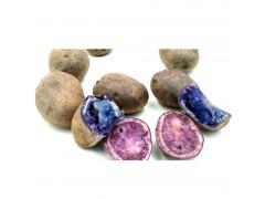 云南大理紫洋芋紫土豆紫马铃薯