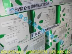 喹诺酮类药残检测试剂盒 喹诺酮类抗菌药检测 ELISA