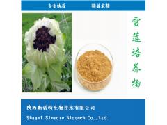 雪莲培养物 5:1 天山雪莲 蛋白质 25% 总黄酮 10%
