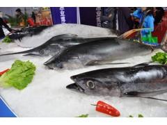 冷冻金枪鱼进口清关流程