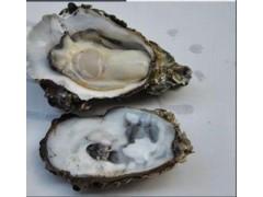 牡蛎粉 牡蛎提取物 牡蛎浓缩粉