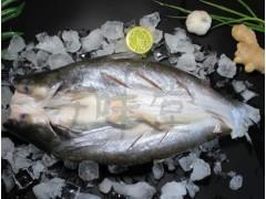 冰冻湄公鱼,烤鱼半成品鱼,腌制鱼,浔味堂,批发