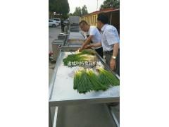 气泡式香葱清洗机  长条蔬菜清洗机 香葱清洗机厂家定做