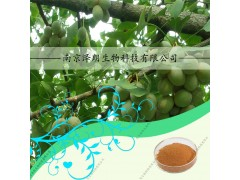 白果提取物 SC认证工厂生产 代加工植物饮料