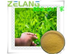 绿茶提取物:茶多酚1~98%,ISO22000食品安全认证