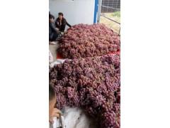 陕西红提葡萄行情,红提葡萄价格