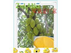 菠萝蜜浓缩粉,SC认证厂家,菠萝蜜粉