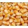 汉江常年求购玉米粒