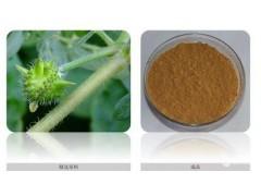 刺蒺藜提取物10~98%,薯蓣皂苷元,代加工植物提取物