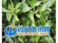 番泻叶提取物 番泻叶甙20%8%