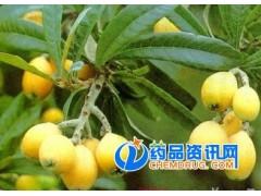 熊果酸 枇杷叶提取物 25-98%